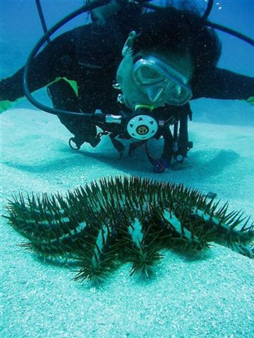 Naoaki watching a Crown of Thorns starfish move along the sand at Hap's Reef