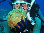 A diver with a Cushion Star